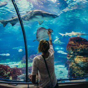 Barselonos akvariumas
